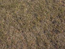 Bakgrund för torkat gräs Sömlös textur av jordningen Royaltyfri Foto