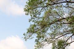Bakgrund för trädsikt royaltyfria foton