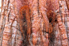 Bakgrund för trädskäll Royaltyfri Bild