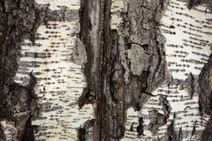 Bakgrund för trädskäll royaltyfri foto