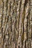 Bakgrund för trädskäll Royaltyfria Bilder