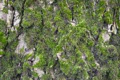 Bakgrund för trädskäll Arkivbilder
