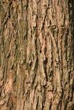 Bakgrund för trädskäll Royaltyfri Fotografi