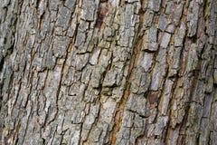 Bakgrund för trädskäll Arkivfoto