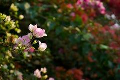 Bakgrund för tropiska växter och blomma Arkivfoto