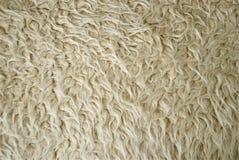 Bakgrund för ull för får` s Royaltyfri Foto