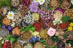 Bakgrund för växt- medicin Royaltyfria Foton