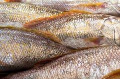 Bakgrund för våg för rå fisk Royaltyfria Bilder