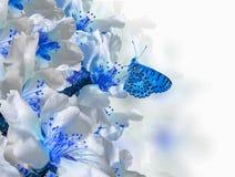 Bakgrund för vår för makro för blommor för fjäril för mandelträd fotografering för bildbyråer