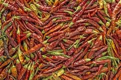 Bakgrund för varm peppar royaltyfri bild
