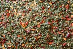 bakgrund för varma kryddor med chilipaprika och oreganon Arkivfoto