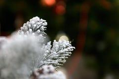 Bakgrund för vinterferier av sörjer kottar som pudras med konstgjord snö och den vita duniga sjalen Brunt för glad jul Arkivbild