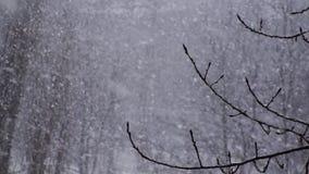 Bakgrund för vintersnöflingasnö lager videofilmer