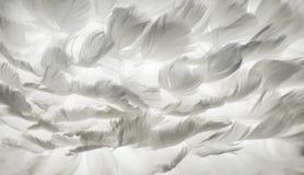 Bakgrund för vit fjäder Arkivbild