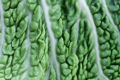 Bakgrund för vitamines för makro för grönsallatgrönsakveggie royaltyfri bild
