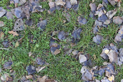 bakgrund fallna leaves Arkivfoto