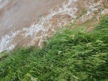 Bakgrund - flodstrand med grönt gräs och snabbt rinnande vatten royaltyfri foto