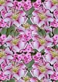 Bakgrund från flowersför andför vitaliljor rosapå en svart bakgrund Royaltyfri Fotografi