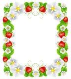 Bakgrund från jordgubbar Arkivbild