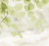 Bakgrund från naturligt arkivfoto
