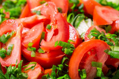 Bakgrund från tomater Royaltyfri Fotografi