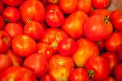 Bakgrund från tomater Royaltyfria Bilder