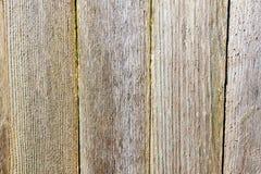 Bakgrund från trä stiger ombord Royaltyfri Foto