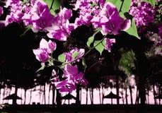 Bakgrund från tropiska blommor Royaltyfria Foton