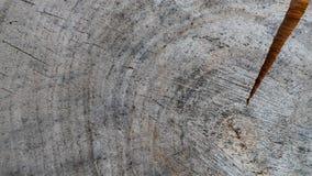Bakgrund från tvärsnitt av trädstammen Abstrakt textur från cirklarna av gammalt ridit ut trä med en spricka arkivbilder