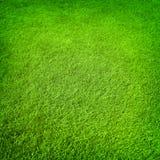 Bakgrund för grönt gräs Fotografering för Bildbyråer