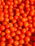 Bakgrund för körsbärsröd tomat Fotografering för Bildbyråer
