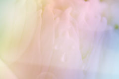 Bakgrund för Lotus kronbladcloseup Royaltyfri Fotografi