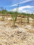 Bakgrund för strand sand Royaltyfria Bilder