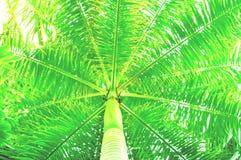 bakgrund gömma i handflatan tropiskt Moderiktig ufogräsplan kopiera avstånd royaltyfria foton