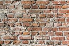 Bakgrund gammal murverktegelstenvägg Arkivbild