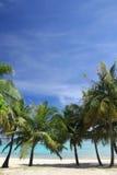 bakgrund guam Royaltyfria Bilder