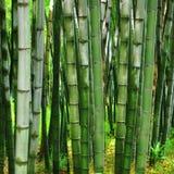 Bakgrund i bamboov Royaltyfri Bild