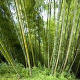 Bakgrund i bambu Royaltyfri Bild