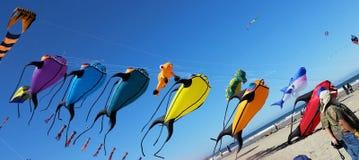 Bakgrund i blått med fisken stränger på Royaltyfria Foton