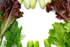 Bakgrund i form av en ram med ett ställe för text av ny gurkor, bladgrönsallat och dill - ingredienser för att förbereda sig arkivfoton