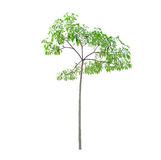bakgrund isolerad enkel treewhite Royaltyfria Foton