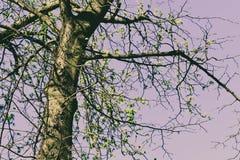 bakgrund isolerad fjädertreewhite Royaltyfri Bild
