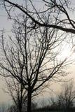 bakgrund isolerad fjädertreewhite Fotografering för Bildbyråer