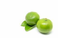 bakgrund isolerad limefruktwhite royaltyfri foto
