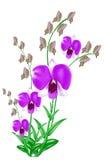 bakgrund isolerad orchidwhite Fotografering för Bildbyråer