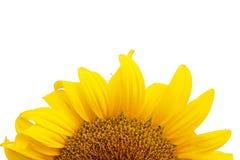 bakgrund isolerad solroswhite royaltyfri bild