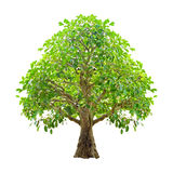 bakgrund isolerad treewhite Arkivfoto