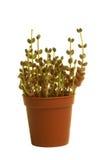 bakgrund isolerad växt Royaltyfria Bilder