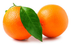 bakgrund isolerade white för apelsiner två Arkivfoto
