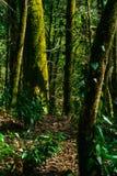Bakgrund - kall tempererad rainforest, royaltyfri foto